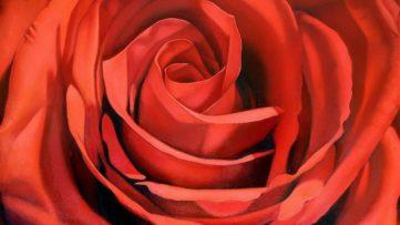 Margaret Morrison - Red Rose