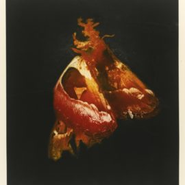 Mat Collishaw-Insecticide-2009