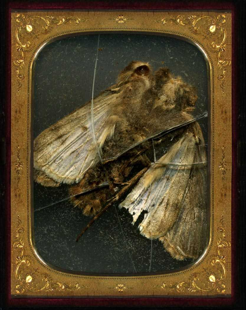 Mat Collishaw-Insecticide 6-2006
