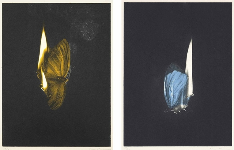 Mat Collishaw-Two Burning Butterflies-2013