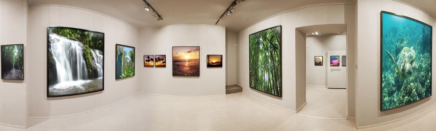 Maui Online Art Gallery