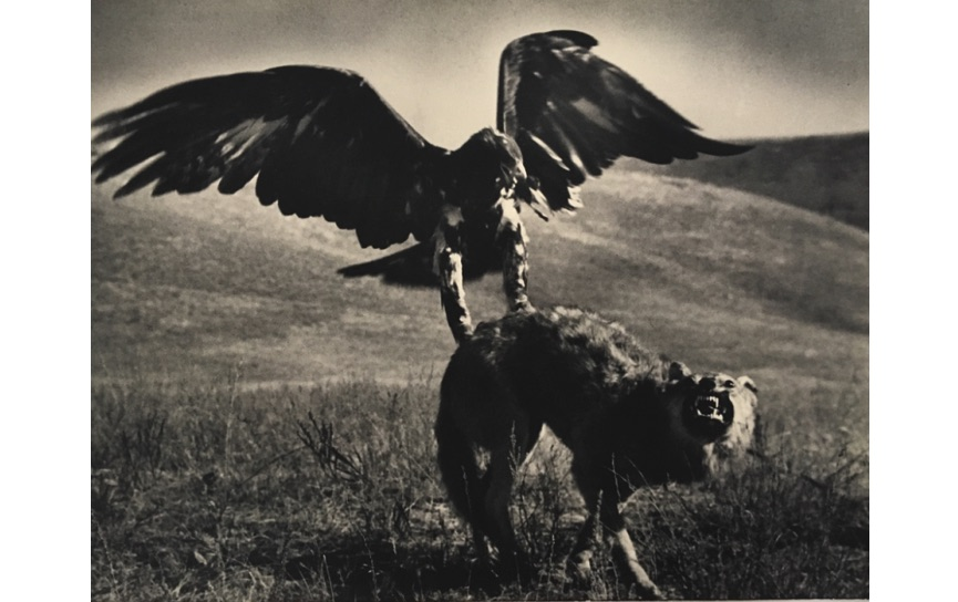 Max Alpert - Hunting with Golden Eagle, Kazakhstan, 1930s.