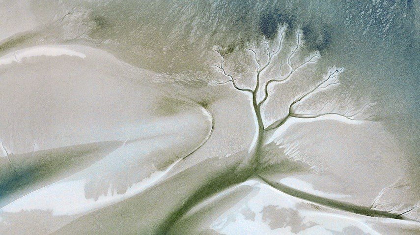 Max Serradifalco Tree Rivers 7 in Olanda in Tanzania,