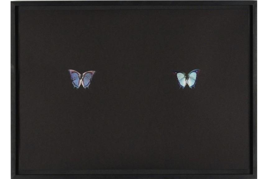 Maximilian Pruefer - Black Butterfly-Print #23, 2017