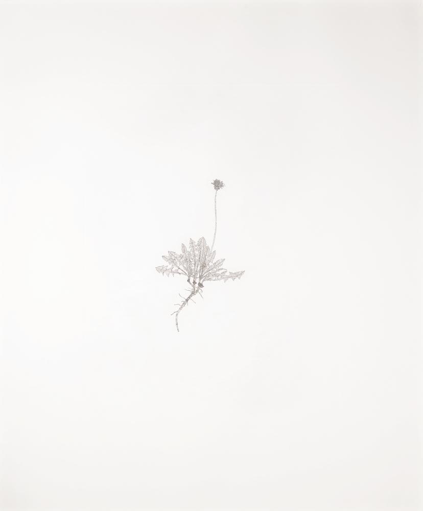 Michael Landy-Common Dandelion-2002
