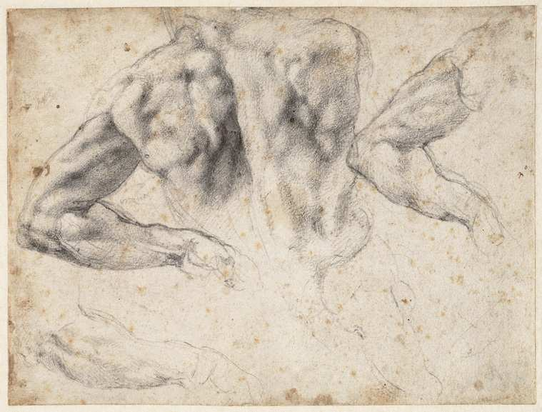 Michelangelo Buonarroti - Study of the back and left arm