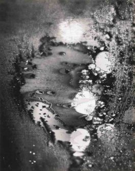 Minor White-Beginnings (Frosted Window Rochester Ny)-1962