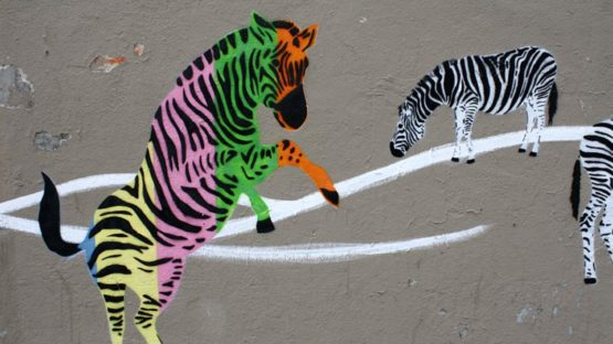 Mosko - Zebras