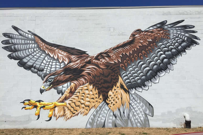mr prvrt red tailed hawk mural for get upstate ithaca new york
