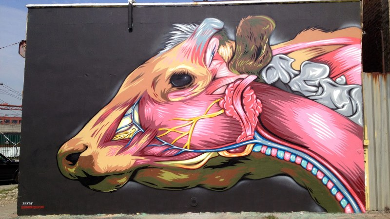 mr prvrt anatomical cow mural