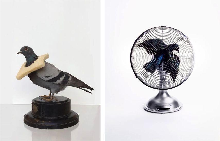 Nancy Fouts - Pigeon with Bread, Nancy Fouts - Bird in Fan