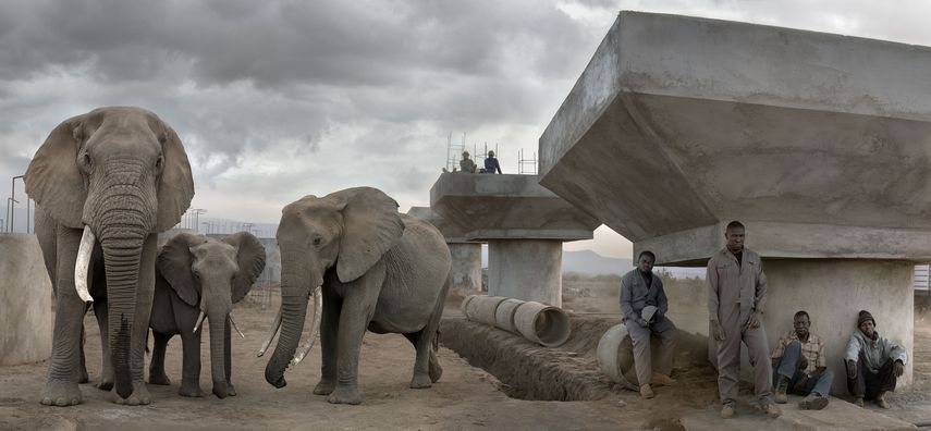 Bridge Construction with Elephants & Workers During the Day, 2018