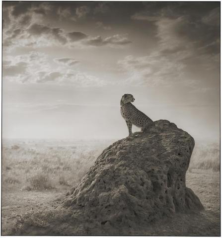 Nick Brandt-Cheetah on Termite Mound, Maasi Mara-2008