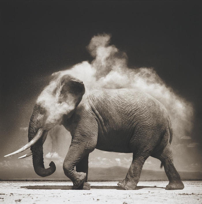 Nick Brandt-Elephant with Exploding Dust, Amboseli-2004