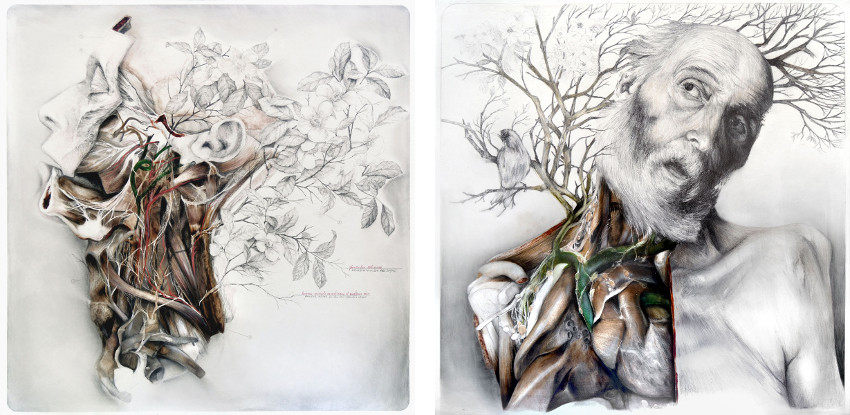 Nunzio Paci - Still life with silk camellias, 2015 (left) - Memories of a body, 2015 (right) - pencil