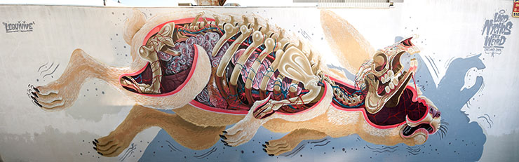 Widewalls Interview Nychos