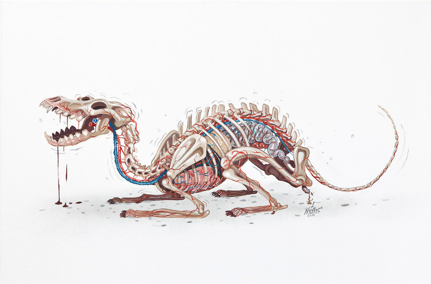 Nychos - Skeleton of a Dobermann, photo credits skullappreciationsociety.com 2016 2015 rabbiteyemovement 2015 facebook new year like
