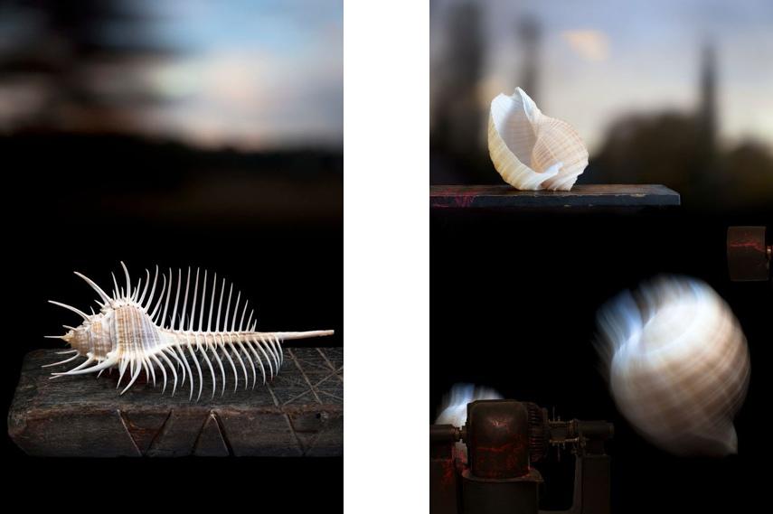 Olivia Parker - Landscape with Shells Olivia Parker - Shell in a Landscape © Olivia Parker, 2011 via lensculture
