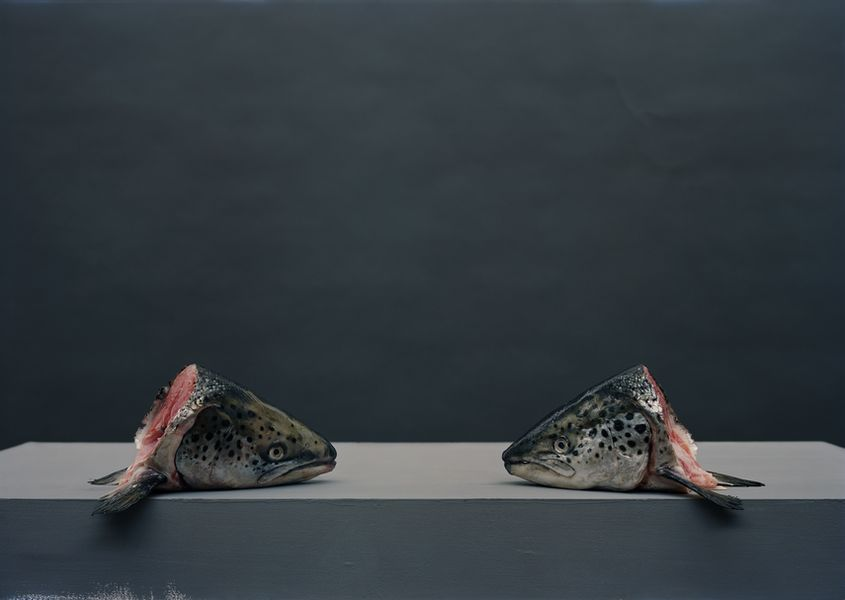 Olivier Richon - Fish, 2012
