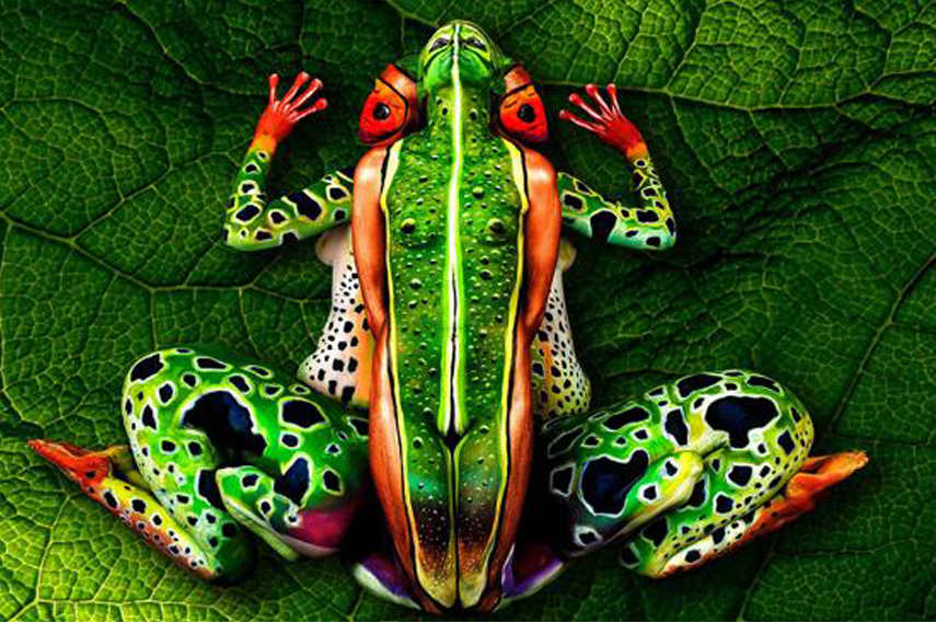 One Frog-Five People - Picture by Picture Media - Image via News com au