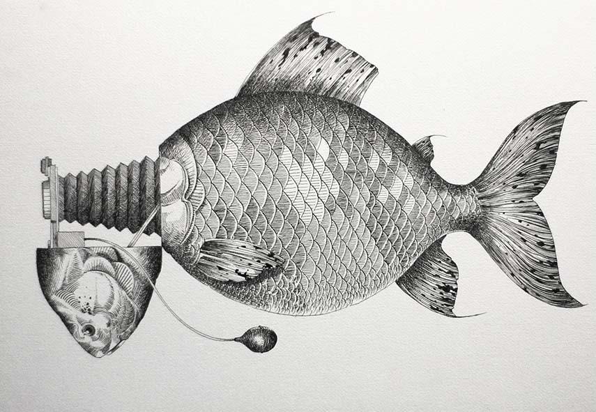 Otto D'Ambra - Camera Fish