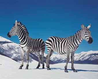 Paola Pivi-Untitled (Zebras)-2003