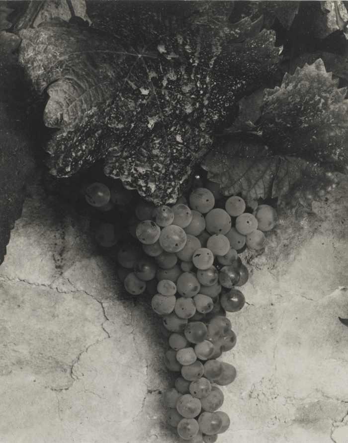 Paul Strand-France (Grapes)-1950
