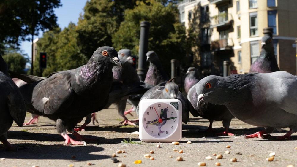 Paul Tarragó - gadabout (guided by pigeons), 2017