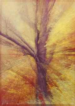 Piotr Uklanski-Untitled (Zoom Tree)-1997