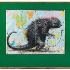 ROA-South American Porcupine-2013