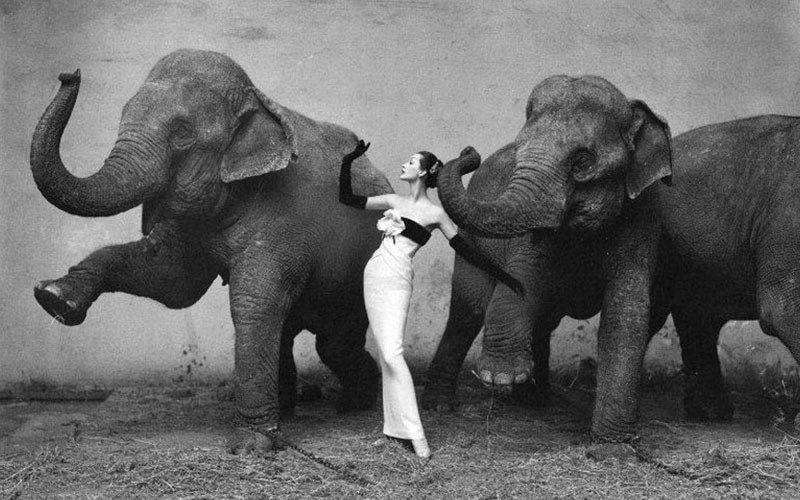 Dovima with Elephants, 1955