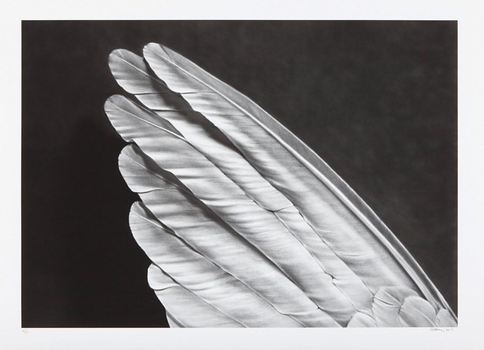 Robert Longo-Angels Wing (small version)-2013