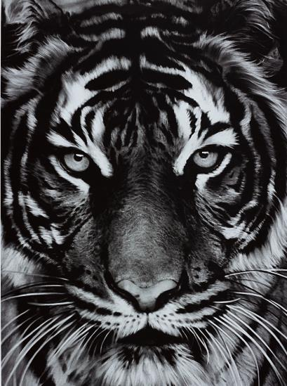 Robert Longo-Tiger-2011