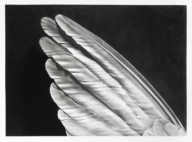 Robert Longo-Untitled (Angel's Wing)-2014