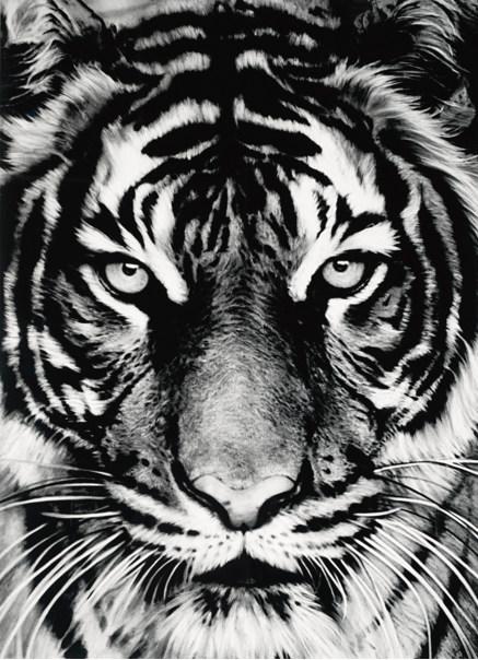 Robert Longo-Untitled (Tiger Head 3)-2011