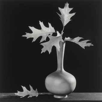 Robert Mapplethorpe-Leaves in Vase-1987