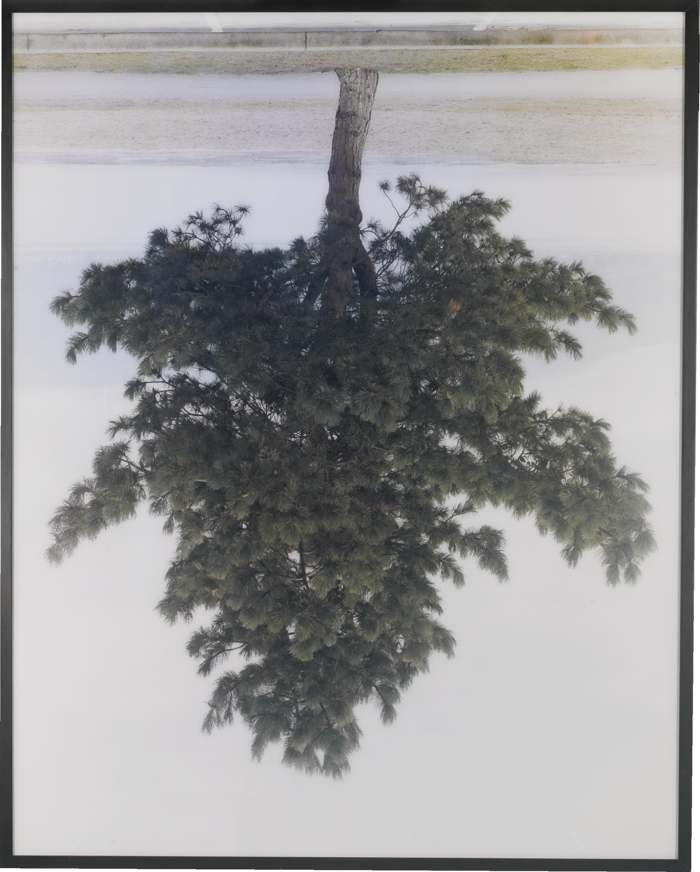 Rodney Graham-Pine Tree Spanish Banks-2001