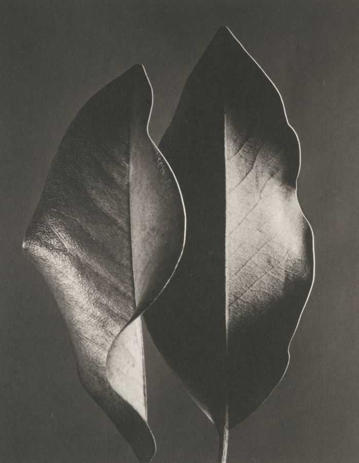 Ruth Bernhard-Gift Of The Commonplace-1976