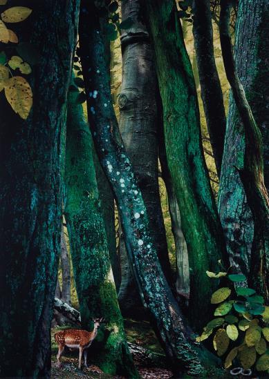 Ruud Van Empel-Ruud van Empel - Study in Green #9-2004