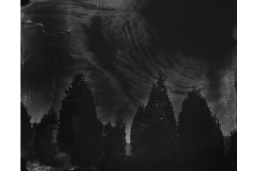 Sally Mann - Battlefields, Fredericksburg (Cedar Trees), 2000