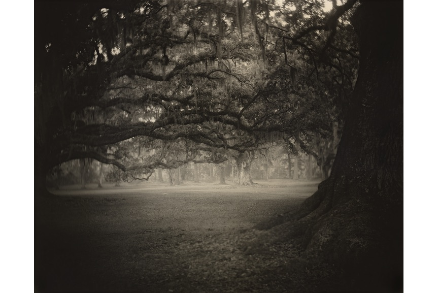 Sally Mann - Deep South, Untitled (Fontainebleau), 1998