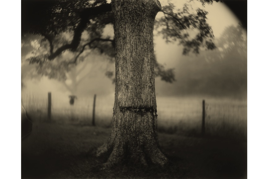 Sally Mann - Deep South, Untitled (Scarred Tree), 1998