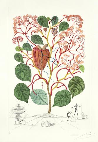 Salvador Dali-Begonia (Anacardium recordans), from Flordali (Flora Dalinae)-1968