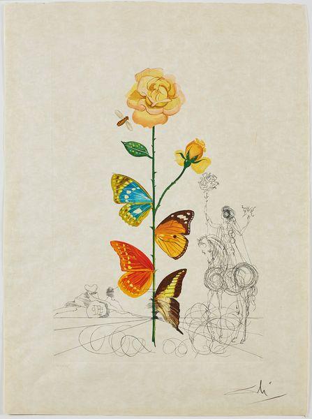 Salvador Dalí Rosa Floridali (Flor Dalinae), 1968