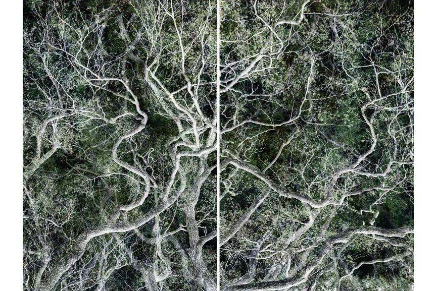 Santeri Tuori - Forest #33, 2017