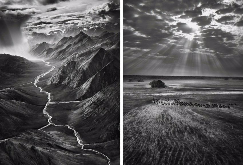 Sebastiao Salgado - Brooks Range, Arctic National Wildlife Refuge, Alaska, USA, 2009 (Left) / Buffalos, Kafue National Park, Zambia, 2010 (Right) new pictures privacy