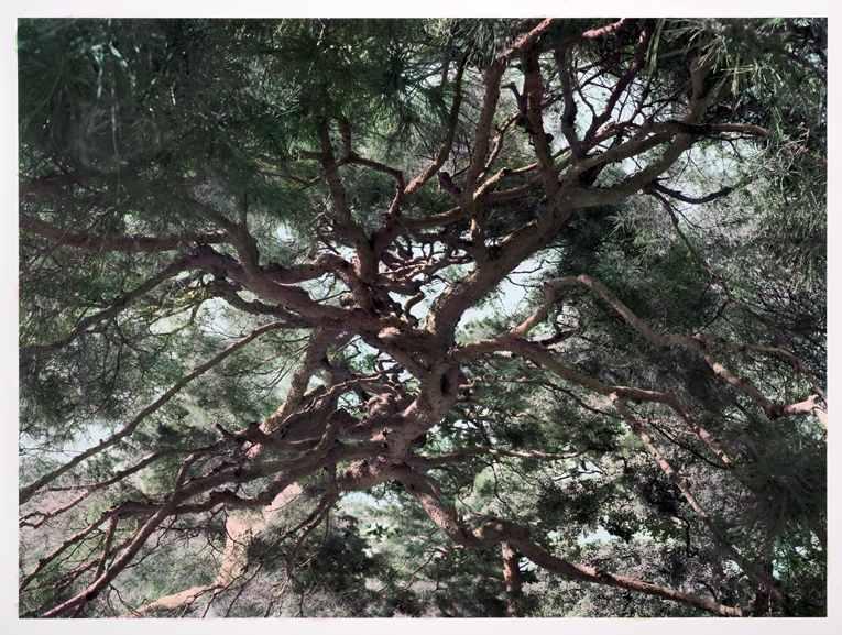 Shi Guowei - Pine