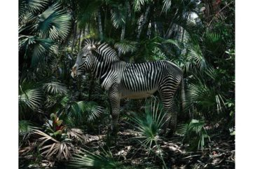 Amalgamation of Anthropomorphic and Zoomorphic in the New Simen Johan Exhibition at Yossi Milo