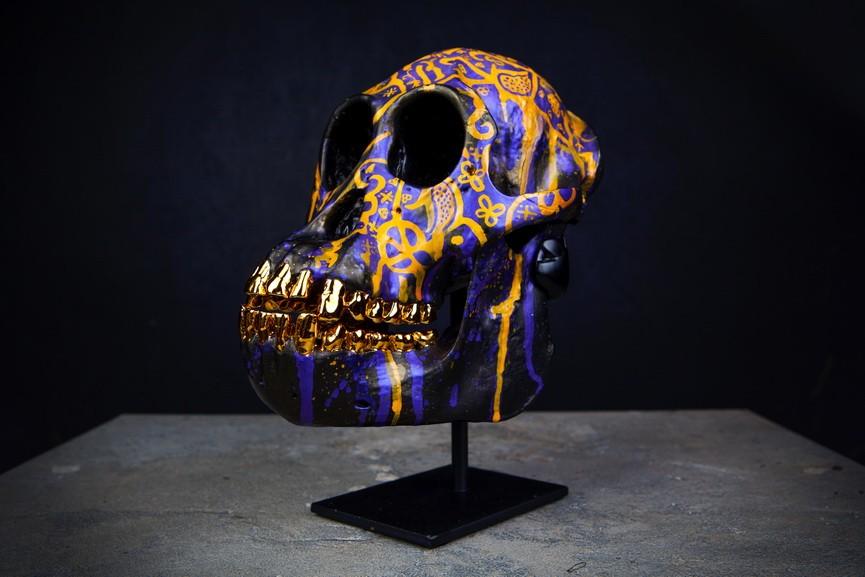 Skull Of Pinda Orangutan