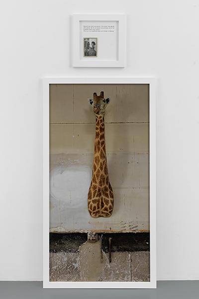 Sophie Calle - La Girafe, 2012
